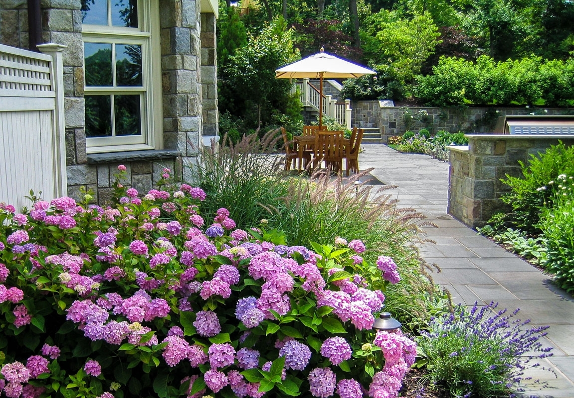 Image of: Montclair Nj Landscape Designbuild Clc Landscape Design Throughout Landscaping With Hydrangeas Landscaping With Hydrangeas Ideas