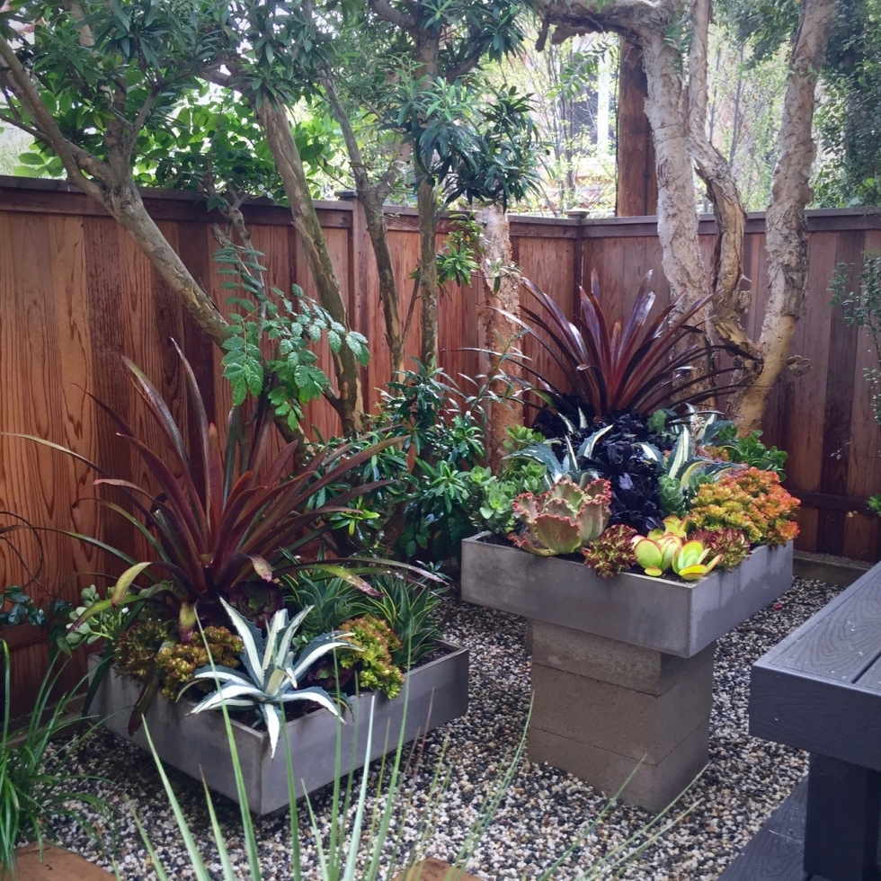 No Water No Cry Landscapes Katerina Morris Specializing In Inside Drought Tolerant Landscaping Amazing Drought Tolerant Landscaping