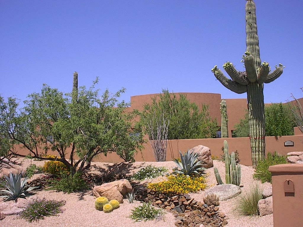 Image of: North Scottsdale Landscape Design For Cactus Landscaping