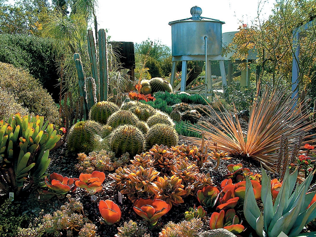 Image of: A Cactus Garden Takes Shape Regarding Cactus Landscaping