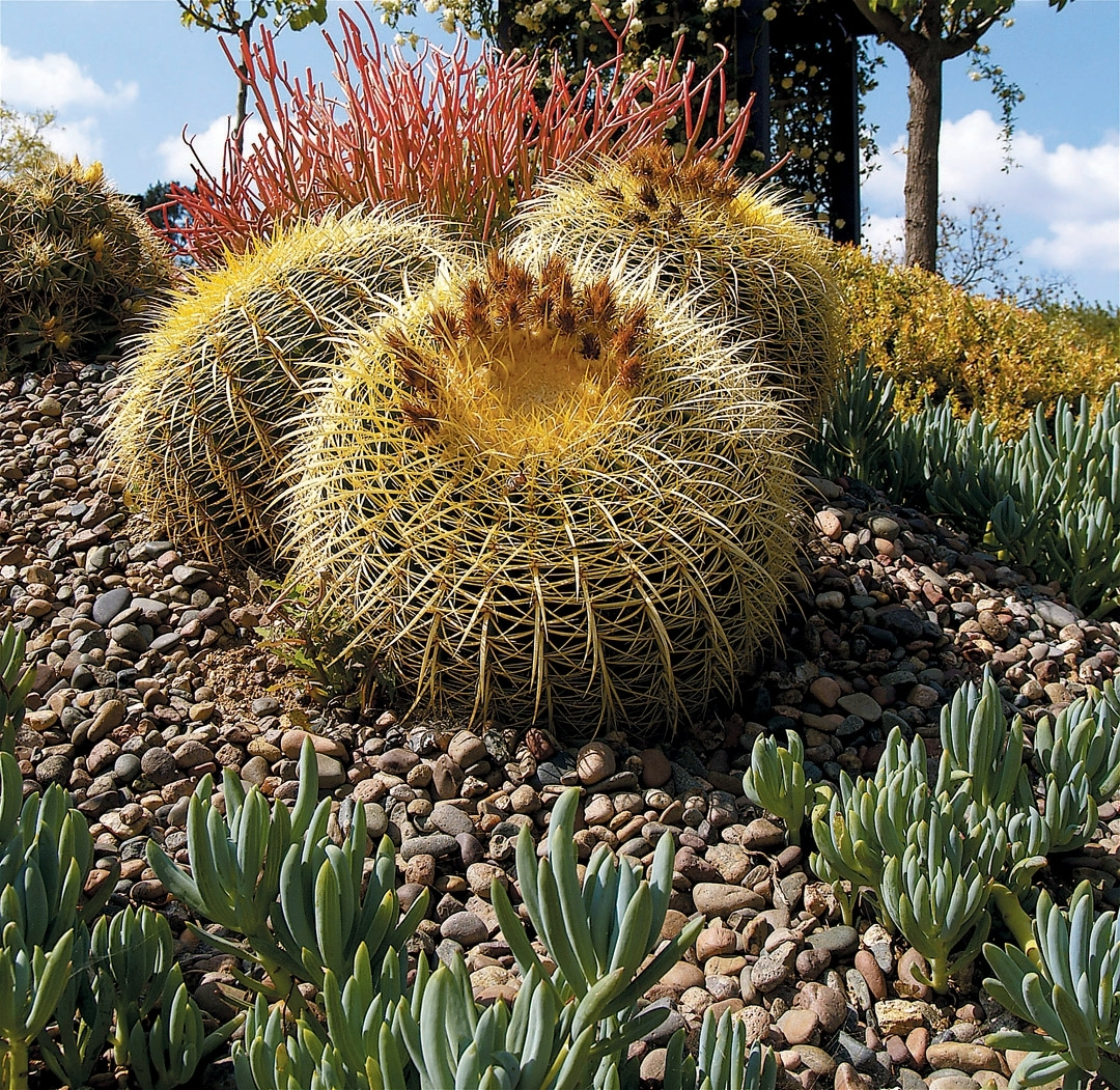 Image of: Takes Shape With Cactus Landscaping