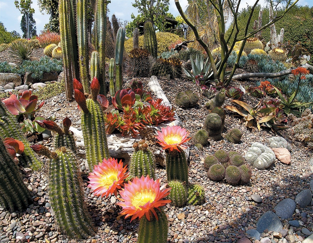 Image of: Pacific Horticulture For Cactus Landscaping