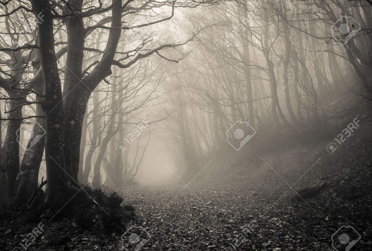 Image of: Path On The Gothic Forest Stock Photo Picture And Royalty Free Within Gothic Landscape Gothic Landscape Ideas
