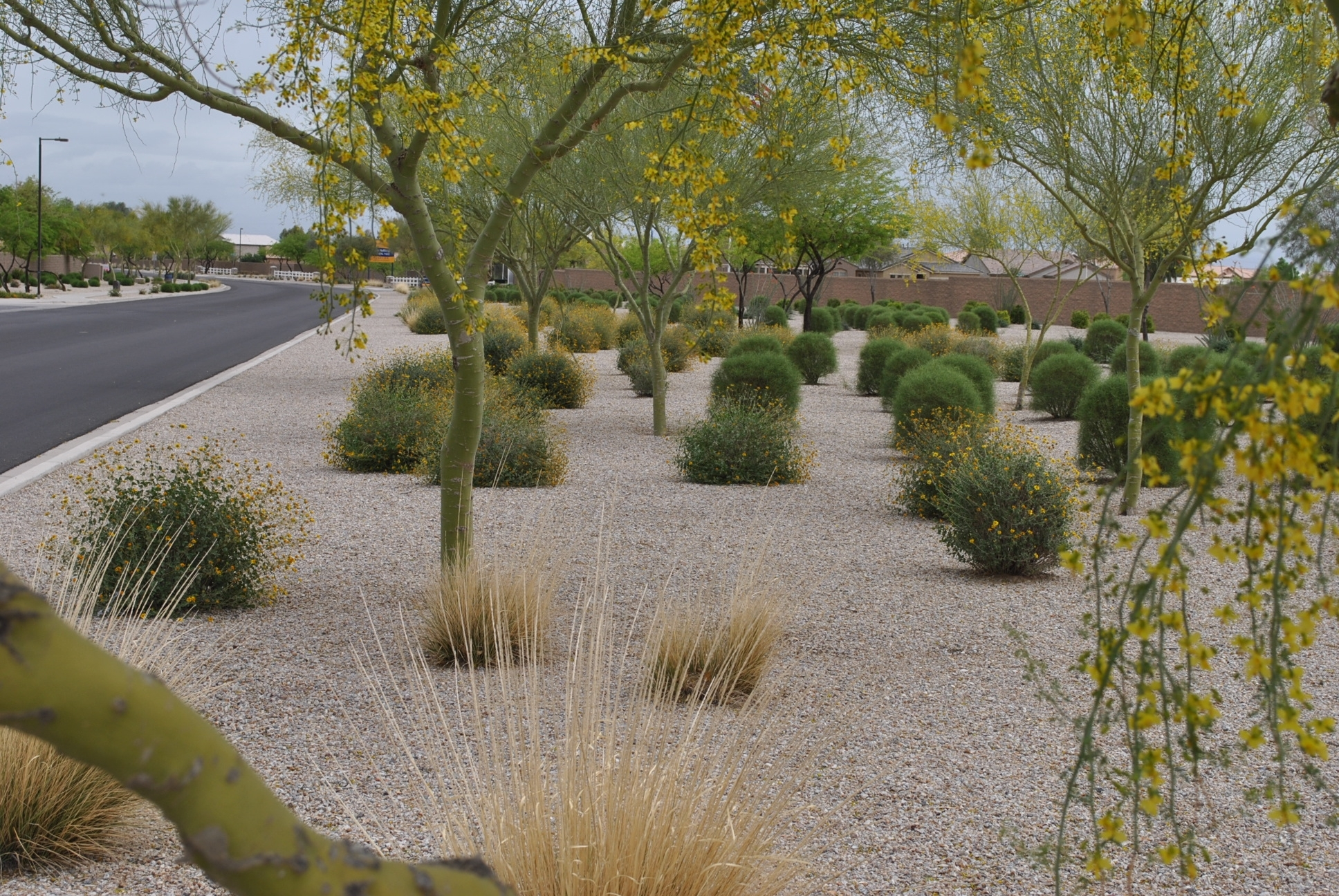 Image of: Plant Care Dlc Learning Center Inside Desert Landscaping Plants Ideal Desert Landscaping Plants At Home