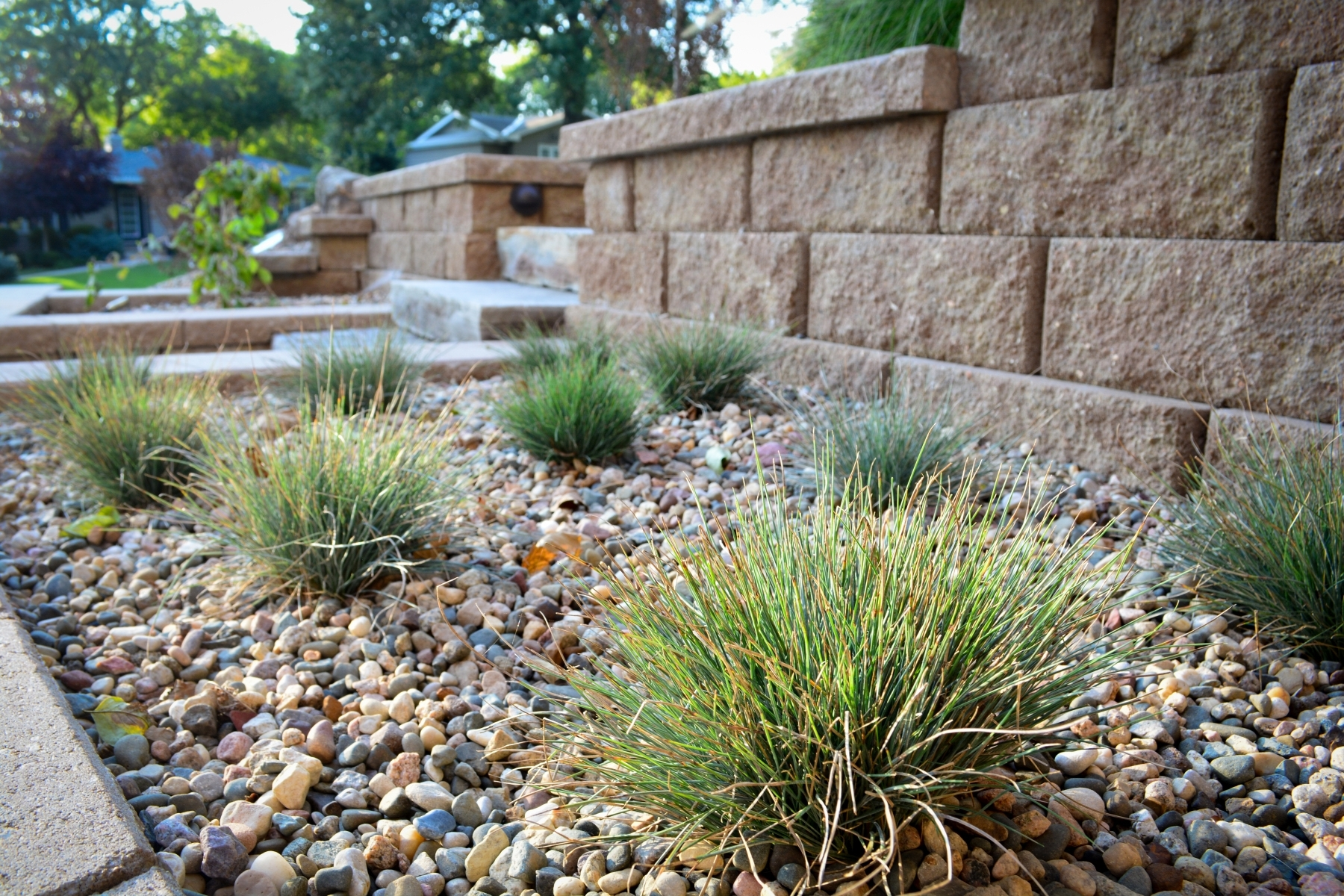 Image of: Planting Design Breaking Ground Landscaping Pertaining To Grasses For Landscaping Special Ideas Grasses For Landscaping