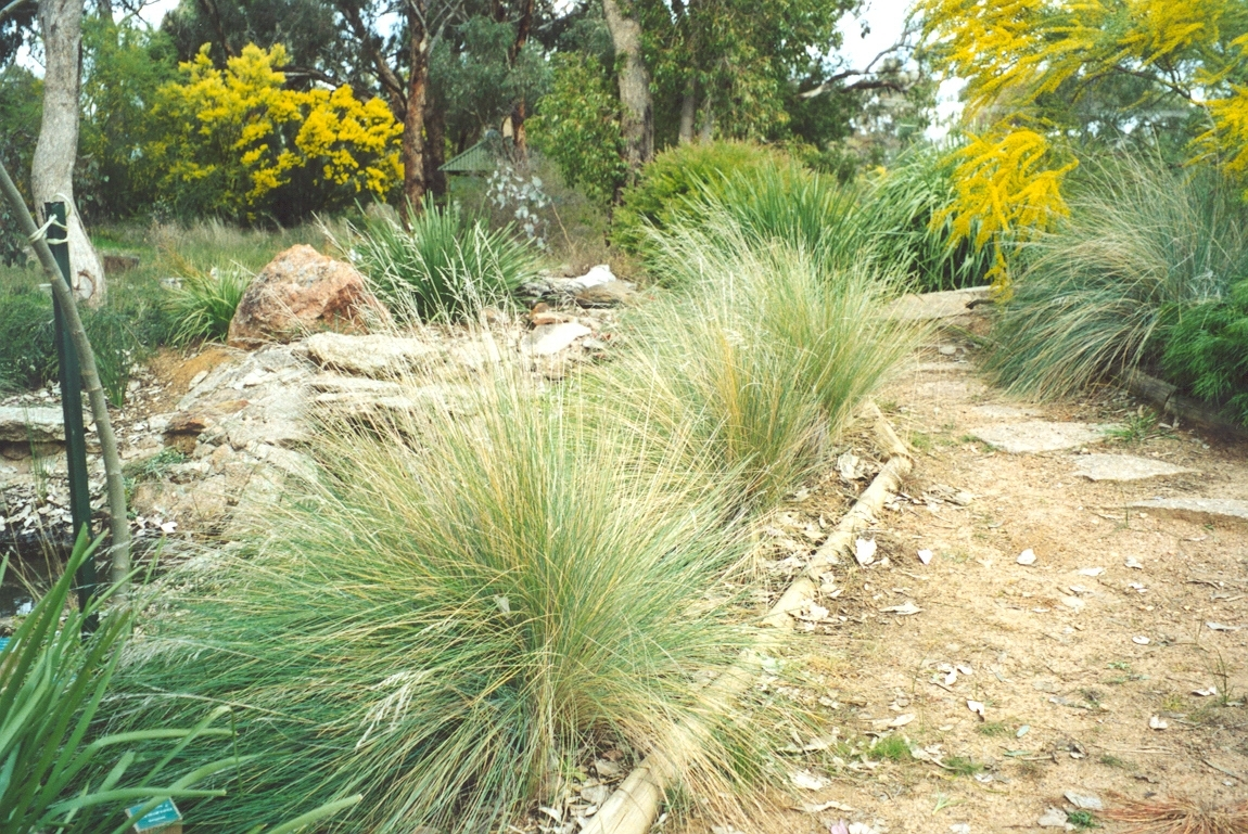 Image of: Poa Labillardieri Is An Large Tussock Grass Used In Landscaping Within Grasses For Landscaping Special Ideas Grasses For Landscaping