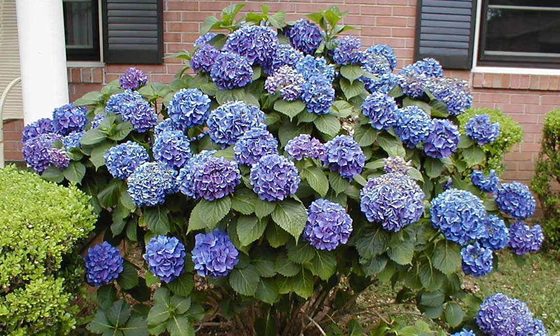 Image of: Professional Landscaping Shrubs Ground Covers Vines Other Intended For Best Landscaping Plants Best Landscaping Plants And Trees