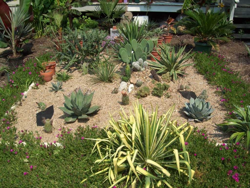 Image of: Small Cactus Garden Design For Cactus Landscaping