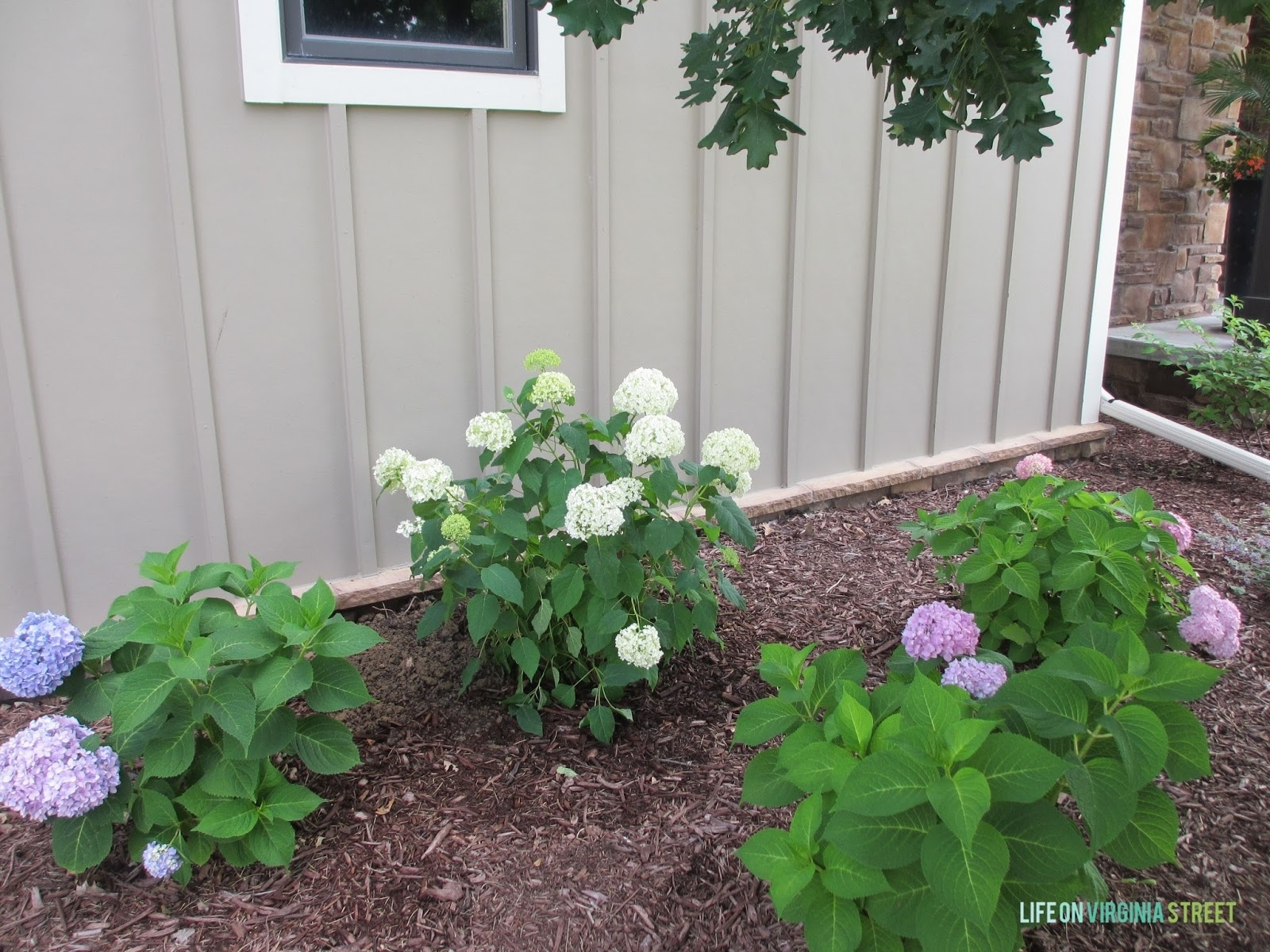Image of: Some Hydrangea Love And Random Landscaping Thoughts Life On Inside Landscaping With Hydrangeas Landscaping With Hydrangeas Ideas