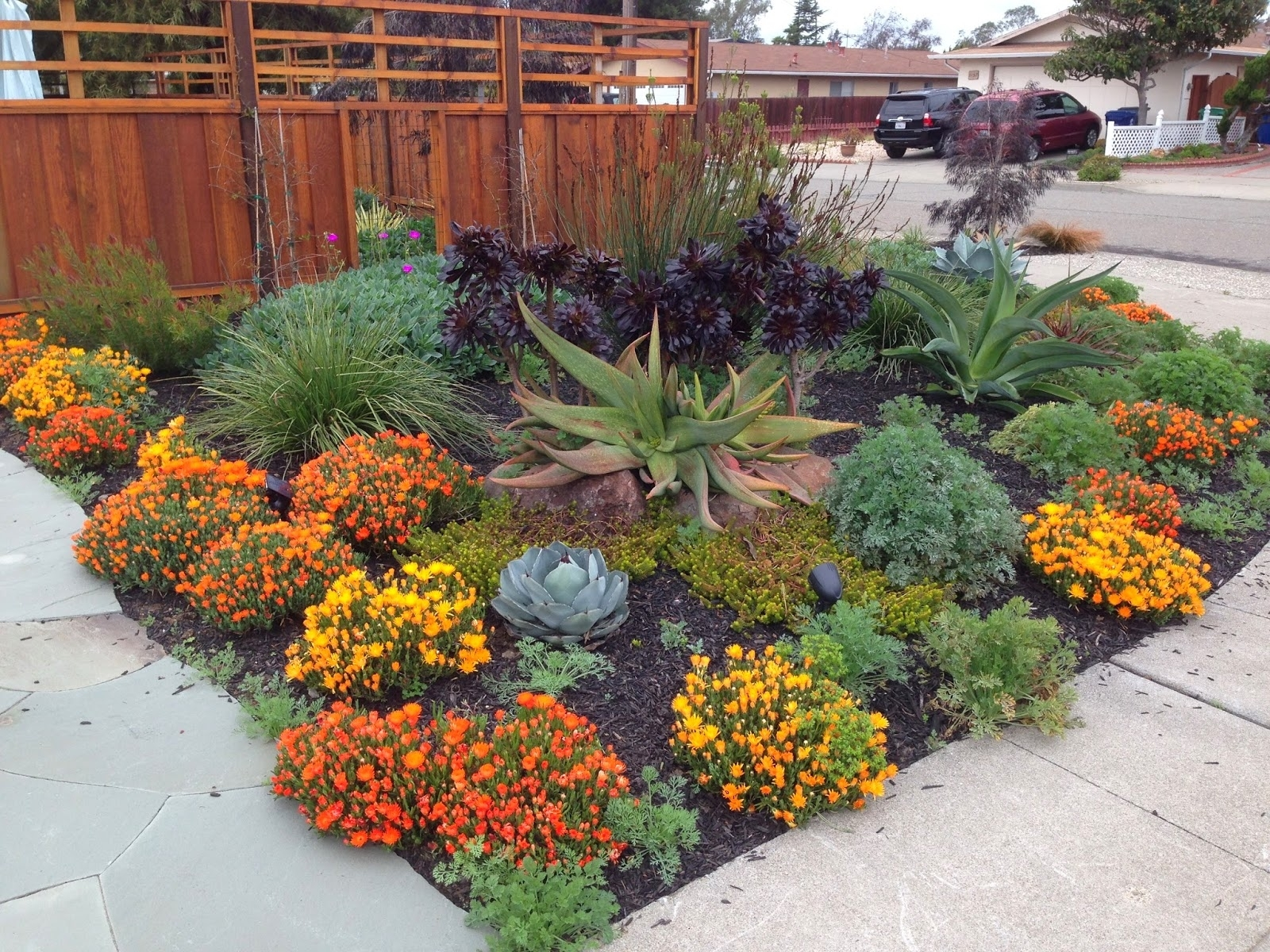 Image of: Sturdy Farallon Gardens Alameda With Nice Drought Tolerant Landscape Design