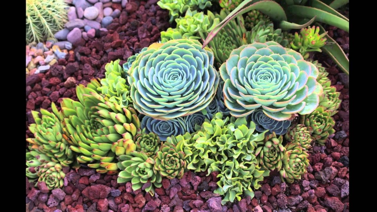 Image of: Succulent Garden Design Secrets Youtube Throughout Lava Rocks Landscaping Red Lava Rocks Landscaping