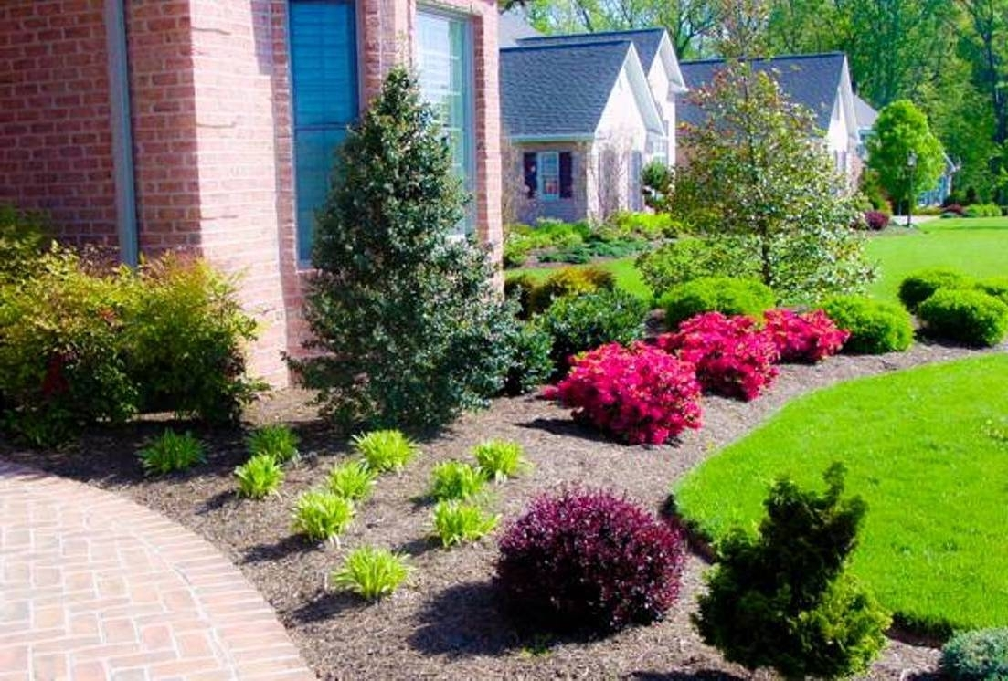 Image of: Unique Plants For Front Yard 18 With Additional Best Home Design With Best Landscaping Plants Best Landscaping Plants And Trees