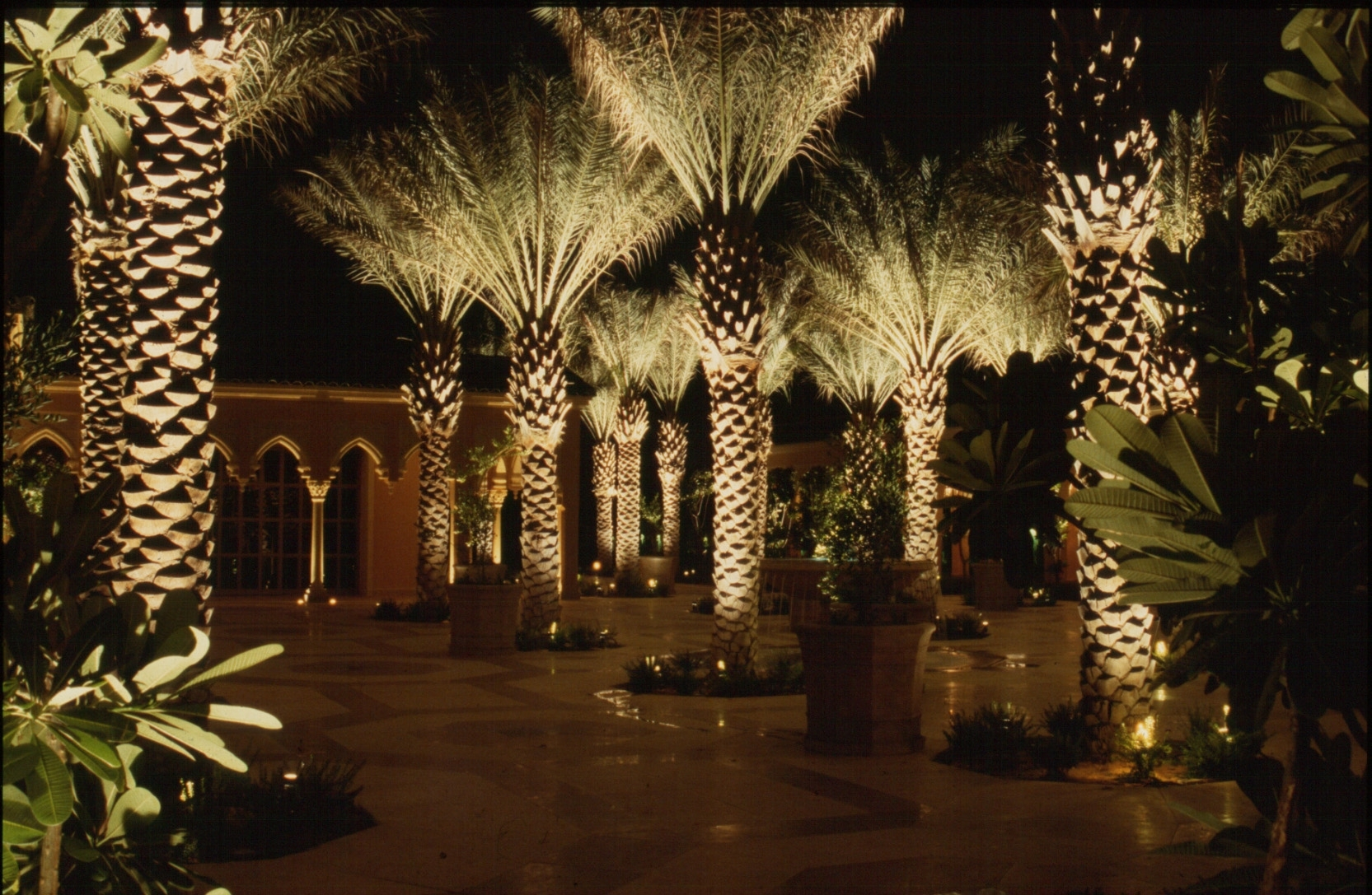 Uplighting Landscape Signature Palms The Light Pinterest In Landscape Uplights Landscape Uplights Year Round