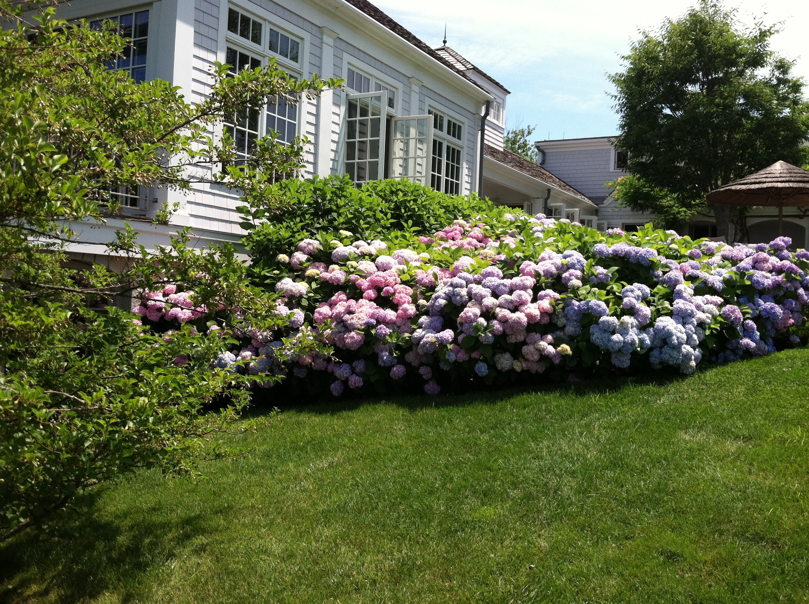 Image of: Villagegardener Living And Gardening On Cape Cod Intended For Landscaping With Hydrangeas Landscaping With Hydrangeas Ideas