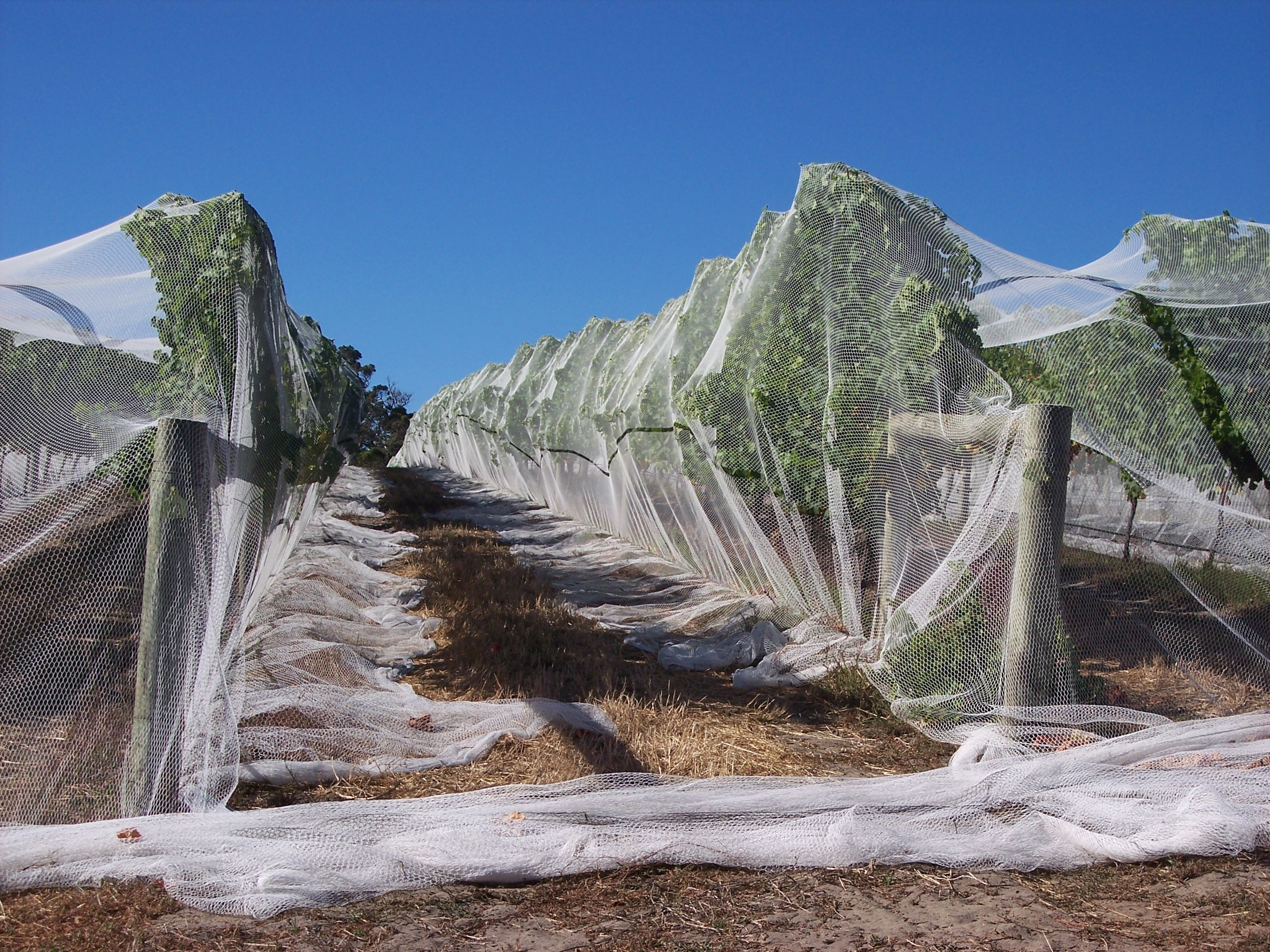 Image of: Vine Nets Australia Helping Protect Australia Vineyards Throughout Landscape Netting Beautiful And Useful Pergola Landscape Netting